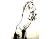 Le cheval dressé