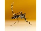 STOP Moustiques-tigres : adoptez les bons gestes !